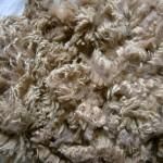 Fleecewood Leicester fleece